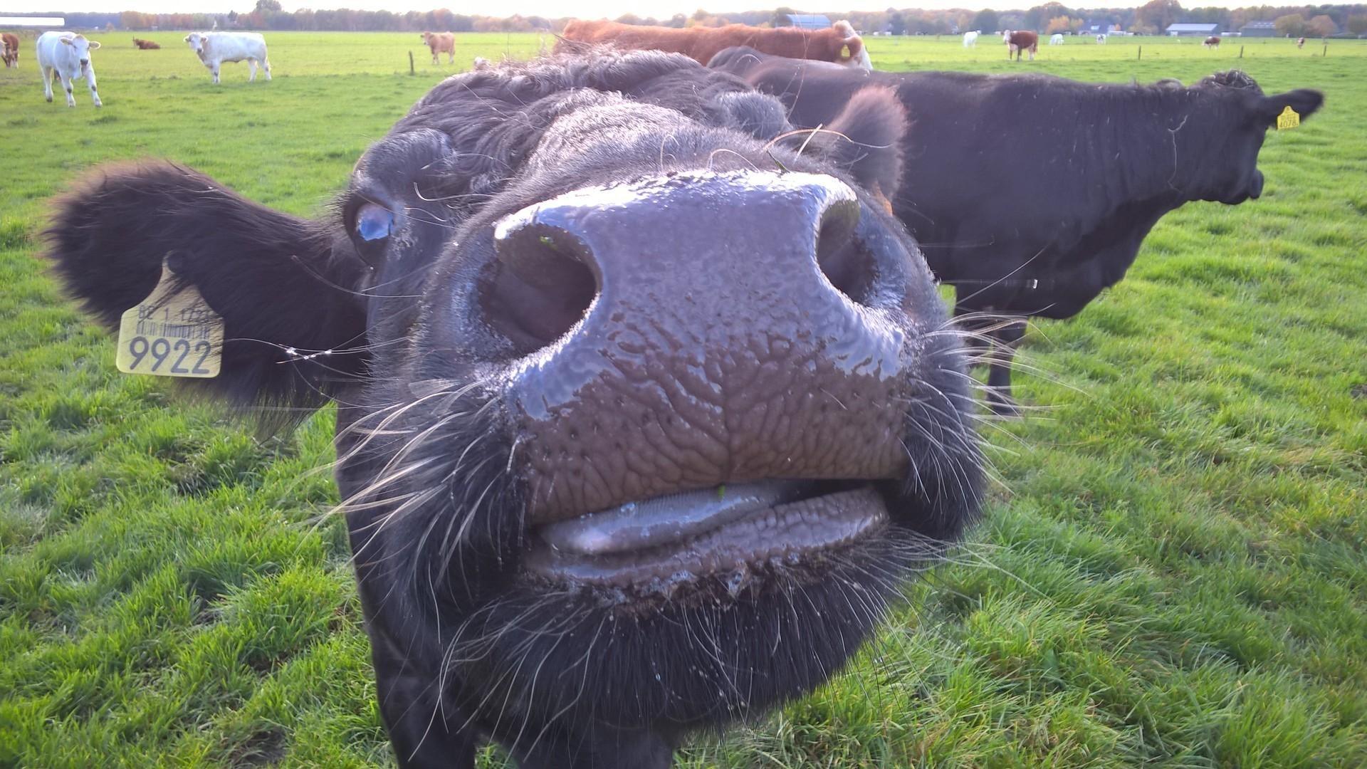 """""""Traag Rund"""" rundvlees van culinaire topkwaliteit. - Slagerij Van de Weyer"""